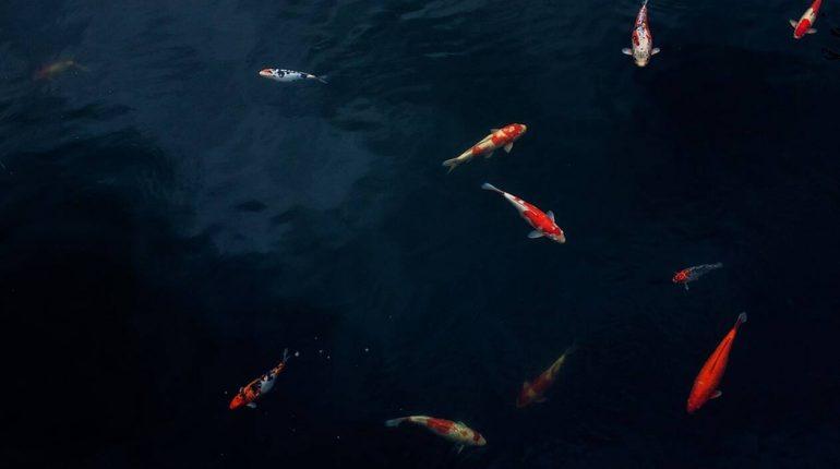 Εκατοντάδες ψάρια βγαίνουν στο λιμάνι της Πρέβεζας! Δείτε το… ασυνήθιστο βίντεο